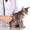 Ветеринарные клиники в Спасск-Рязанском
